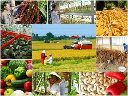 Tái cơ cấu nông nghiệp và giảm nghèo bền vững