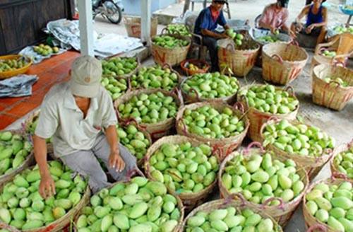 Xuất khẩu rau quả: Bài học từ giá heo