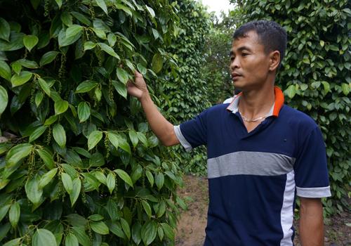 Đắk Lắk: Nhiều hộ thoát nghèo từ vốn vay ưu đãi