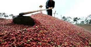 Ấn Độ bỏ lệnh cấm nhập khẩu nông sản Việt Nam