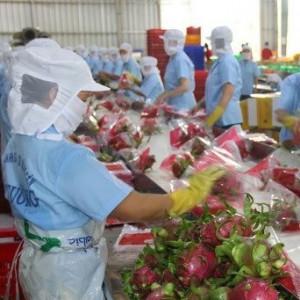 XK rau quả tăng trưởng 2 con số, dù nhiều loại vào mùa rớt giá