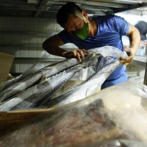"""Giải pháp gỡ khó cho hàng chục nghìn tấn hải sản """"đóng băng""""?"""