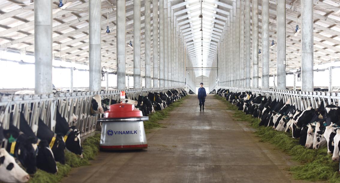 tổ-hợp-trang-trại-bò-sữa-công-nghệ-cao-vianmilk-tại-thanh-hóa-mở-ra-bước-phát-triển-mới-cho-ngành-nông-nghiệp-chăn-nuôi-bò-sữa-tại-việt-nam.jpg
