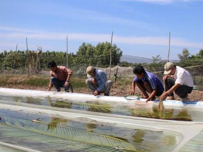 Huyện Năm Căn: XDNTM gắn với tái cơ cấu nông nghiệp